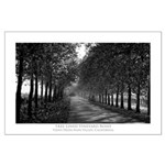 Tree Lined Vineyard Road Large Poster