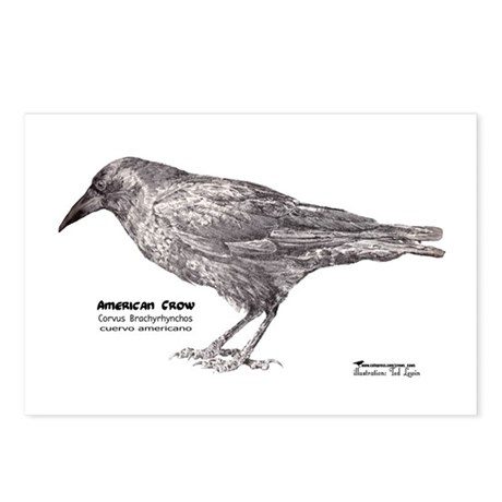 American Crow Postcards (Package of 8)