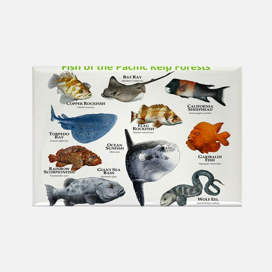 Fish of the Kelp Forests of the Pacific Ocean Rect