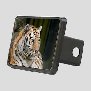 Siberian Tigress Rectangular Hitch Cover