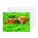 Nuzzling Cows Greeting Card