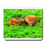 Nuzzling Cows Mousepad