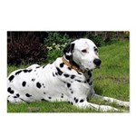 ...Dalmatian 02... Postcards (Package of 8)