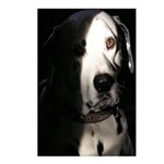 ...Dalmatian 01... Postcards (Package of 8)