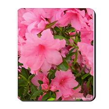 Pink Flowering Azalea Mousepad