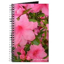 Pink Flowering Azalea Journal