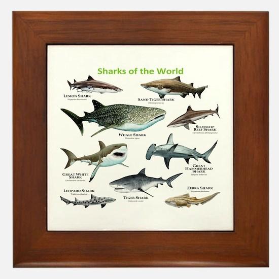 Sharks of the World Framed Tile