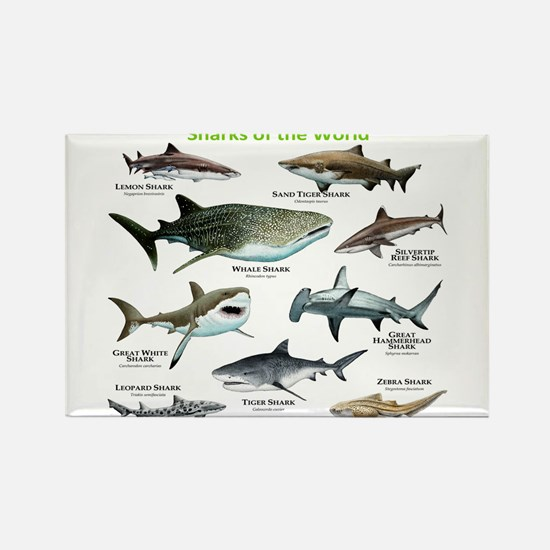 Sharks of the World Rectangle Magnet