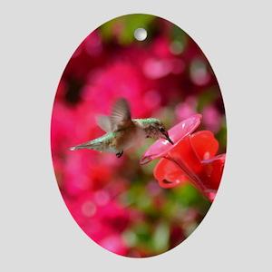 Hummingbird 3230 - Ornament (Oval)
