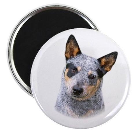 """Australian Cattle Dog 2.25"""" Magnet (10 pack)"""