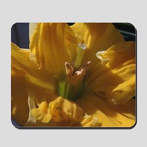 Daffodil Closeup Mousepad