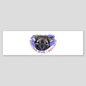 Chihuahua (long hair) Bumper Sticker