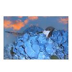 Blue Hydrangea Postcards (Package of 8)