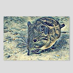 elephant shrew (Macroscel Postcards (Package of 8)