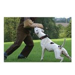 Schutzhund American Bulldog Postcards (Package of