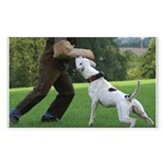 Schutzhund American Bulldog Sticker (Rectangle)