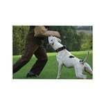 Schutzhund American Bulldog Rectangle Magnet (100