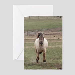 TREATS!!!! Greeting Cards (Pk of 10)