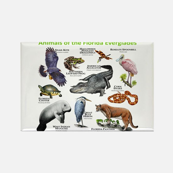 Animals of the Florida Everglades Rectangle Magnet