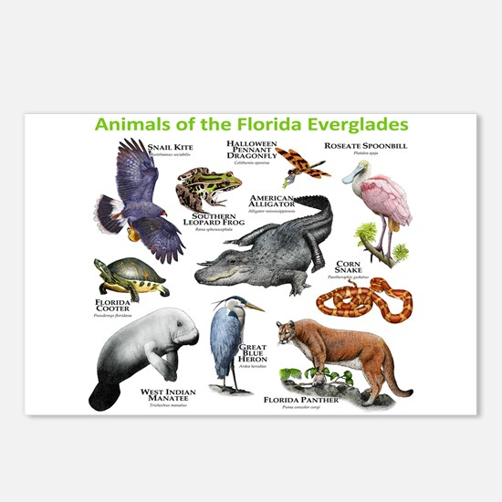 Animals of the Florida Everglades Postcards (Packa