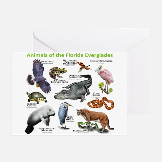 Animals of the Florida Everglades Greeting Cards (