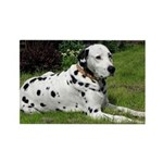 ...Dalmatian 02... Rectangle Magnet