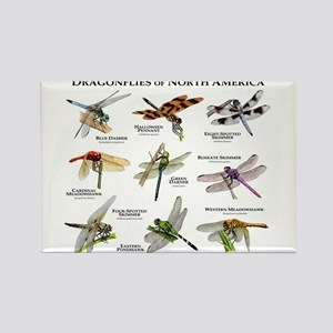 Dragonflies of North America Rectangle Magnet