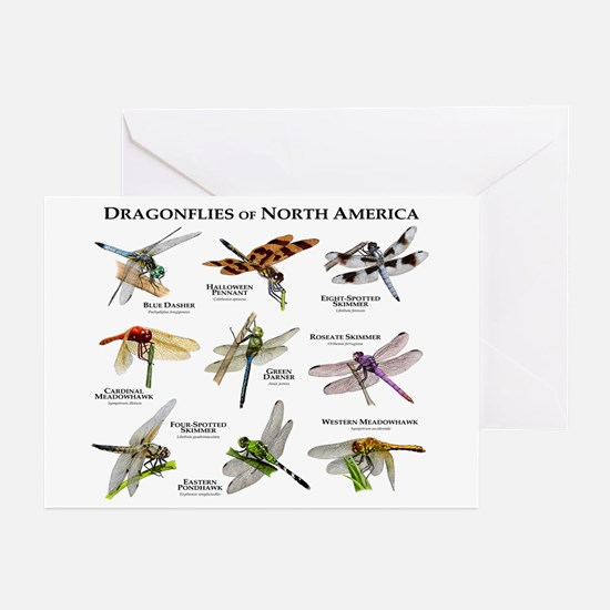 Dragonflies of North America Greeting Cards (Pk of