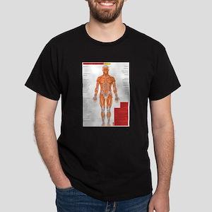 2-MuscleAnterior T-Shirt
