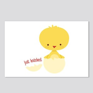 Just Hatched Chicken Postcards (Package of 8)