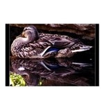 Upon Reflection Postcards (Package of 8)