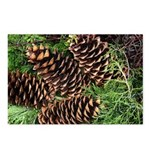 Pine Cones Postcards (Package of 8)