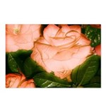 Peach Blush Postcards (Package of 8)