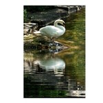 Reflected Swan Postcards (Package of 8)