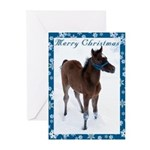 Arab Foal Christmas Cards (Pack of 10)