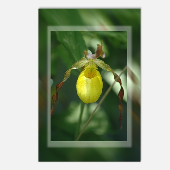 Lady Slipper Beauty Postcards (Package of 8)
