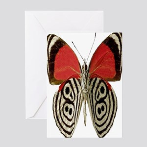 BUTTERFLY RED/BLACK Greeting Card