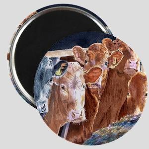 Calves at Brunch Magnet