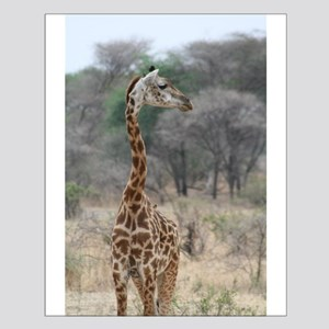 Young Giraffe - Small Poster