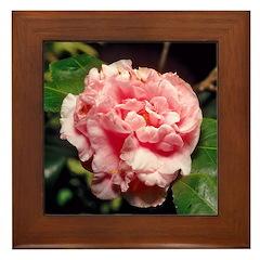 Camillia 'Debutante' Picture Framed Tile
