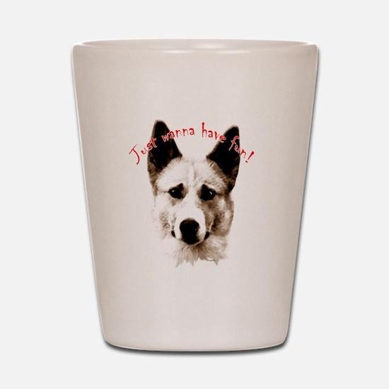 canaan dog Shot Glass