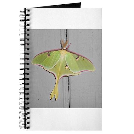 Pretty Green Moth Journal