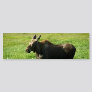 Cow Moose #01 Sticker (Bumper)