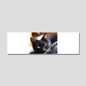 Sleek Black Cat Car Magnet 10 x 3