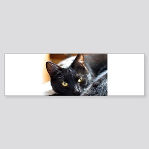 Sleek Black Cat Sticker (Bumper)