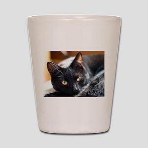 Sleek Black Cat Shot Glass