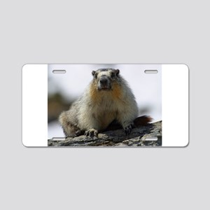Grumpy Groundhog Aluminum License Plate
