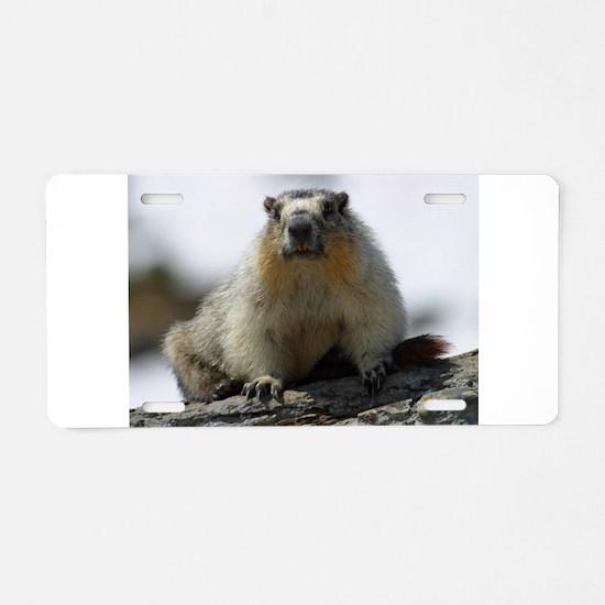 Grumpy Groundhog Aluminum License Plate