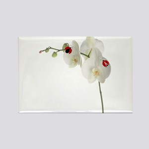 Lady Bug Orchid Rectangle Magnet