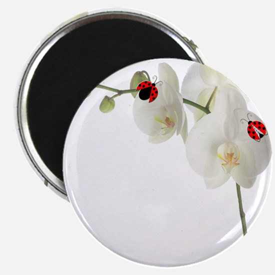 """Lady Bug Orchid 2.25"""" Magnet (10 pack)"""